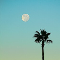 palm tree with moon in background